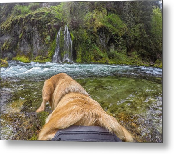 Metal Print featuring the photograph Salt Creek Falls By Photo Dog Jackson by Matthew Irvin