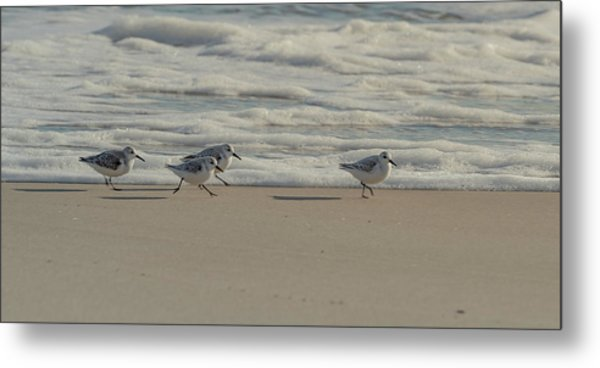 Metal Print featuring the photograph Sanderlings At Assateague Island National Seashore I 1x2 by William Dickman