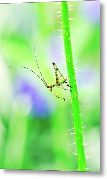Say Hello To My Little Green Insect Friend Metal Print