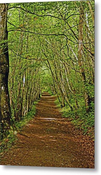 Scotland. Killiecrankie. Path Through The Trees. Metal Print