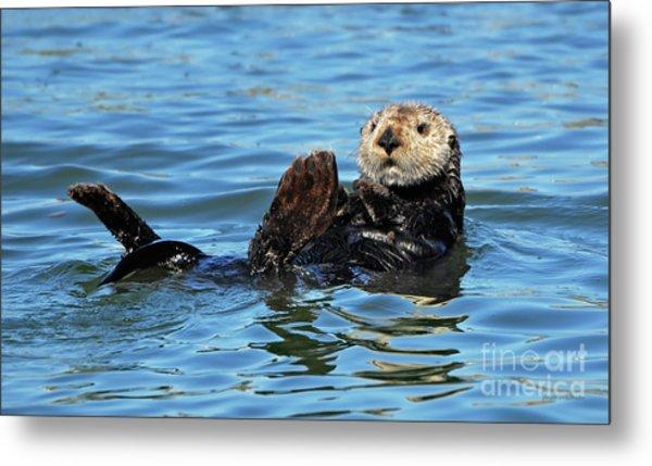 Sea Otter Primping Metal Print