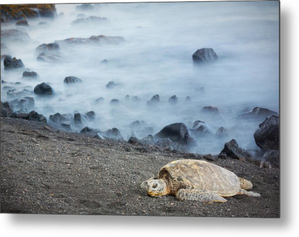 Metal Print featuring the photograph Sea Turtle by Nicole Young