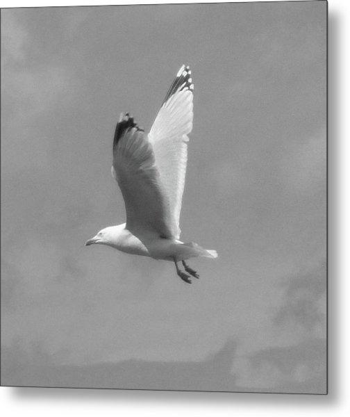 Seagull Over Llandudno Metal Print