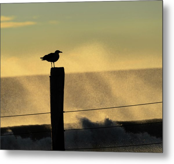 Metal Print featuring the photograph Seagull Silhouette On A Piling by William Dickman