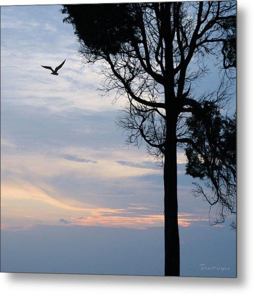 Seagull Sunset At Catawba Metal Print