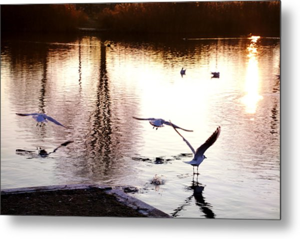 Seagulls In The Morning Metal Print