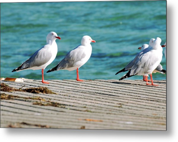 Metal Print featuring the photograph Seagulls On The Beach. by Rob D