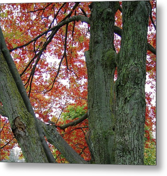 Seeing Autumn Metal Print