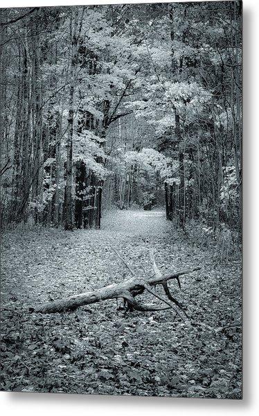Selenium Trail  Metal Print