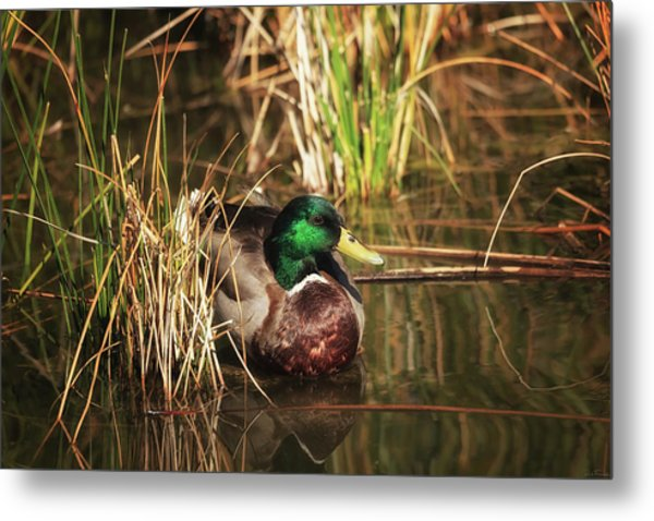 Metal Print featuring the photograph Serene by Rick Furmanek