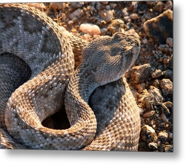 Metal Print featuring the photograph Serpent Of The Southwest by Judy Kennedy