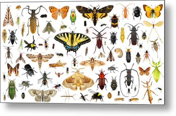 Set Of Insects On A White Background Metal Print