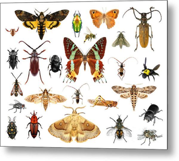 Set Of Insects On White Background Metal Print