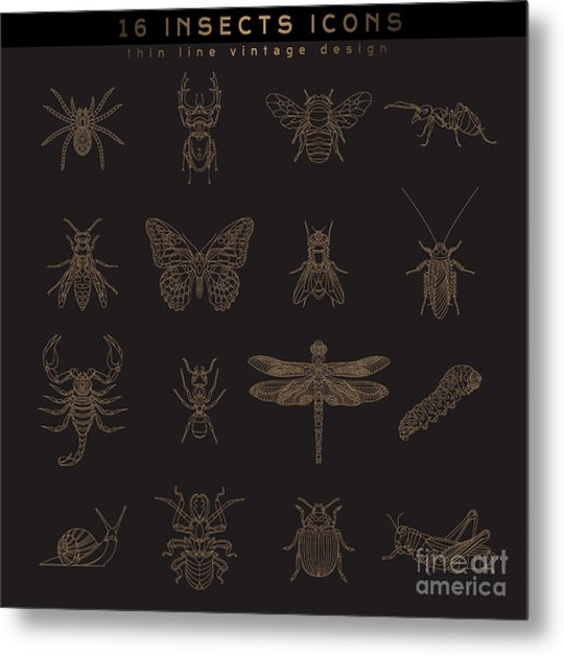 Set Of Vintage Thin Line Insects Icons Metal Print