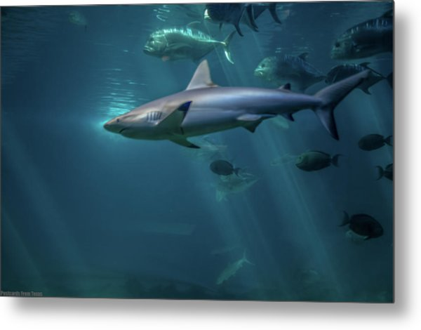 Shark Attack Metal Print