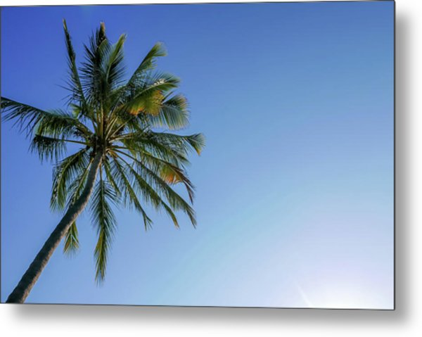 Shades Of Blue And A Palm Tree Metal Print