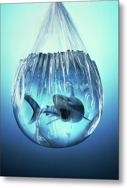 Shark In A Bag Metal Print by Ray Massey