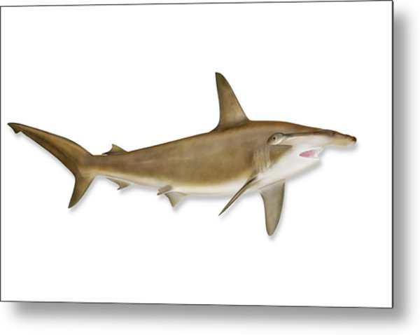 Shark With Clipping Path Metal Print by Georgepeters