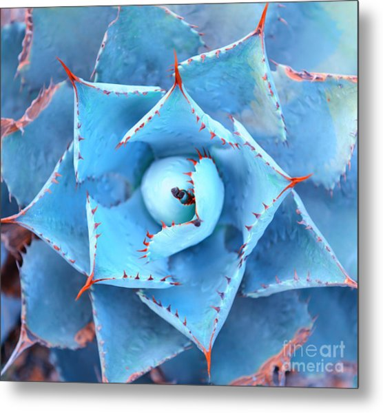 Sharp Pointed Agave Plant Leaves Metal Print