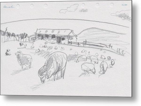 Sheep On Chatham Island, New Zealand Metal Print