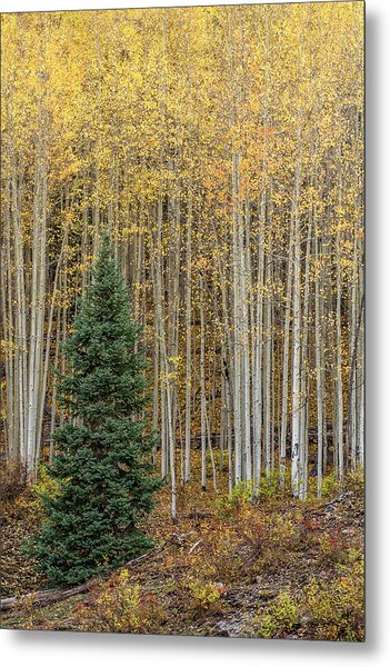 Metal Print featuring the photograph Shimmer by Angela Moyer