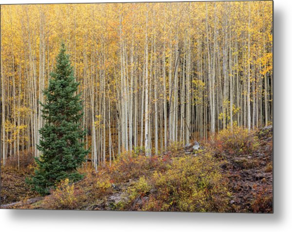 Metal Print featuring the photograph Shimmering Aspens by Angela Moyer