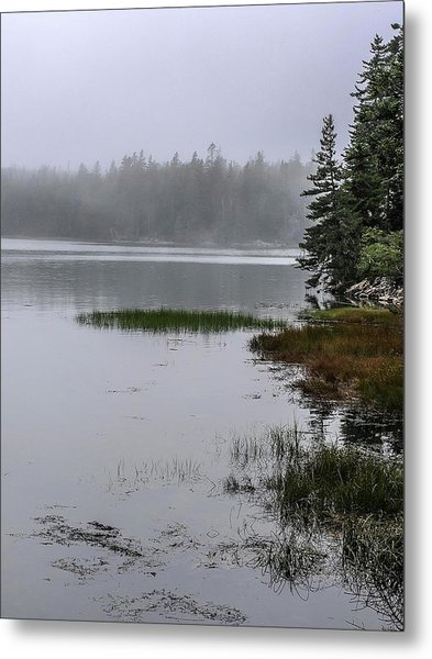 Ship Harbor Nature Trail, Acadia National Park Metal Print