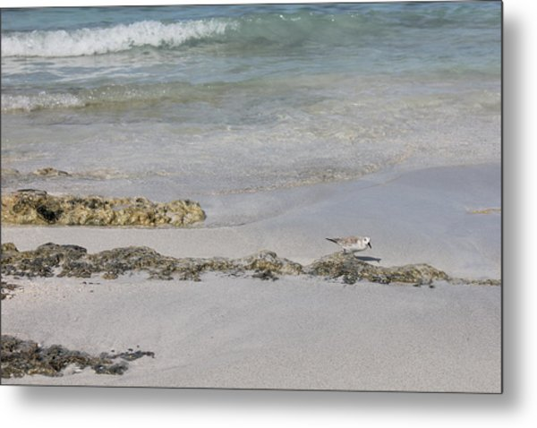Shorebird Metal Print