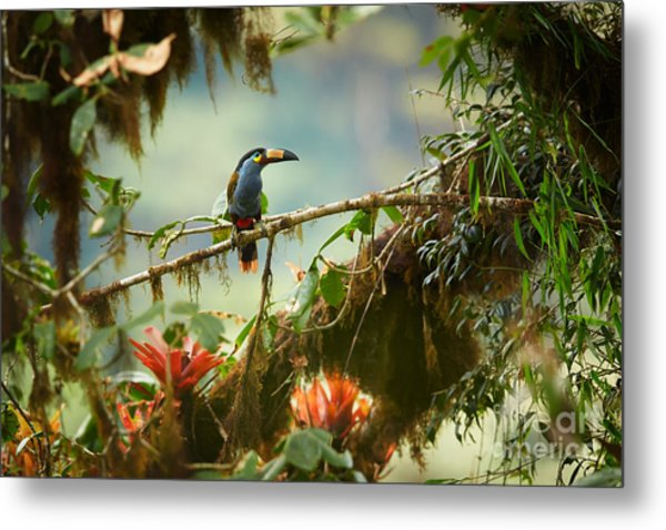 Shy High Altitude Andean Colorful Metal Print
