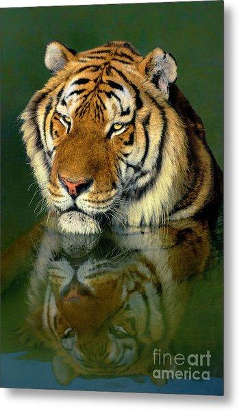 Siberian Tiger Reflection Wildlife Rescue Metal Print