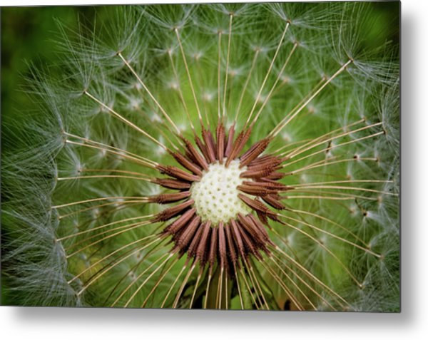 Silent Wishes Metal Print