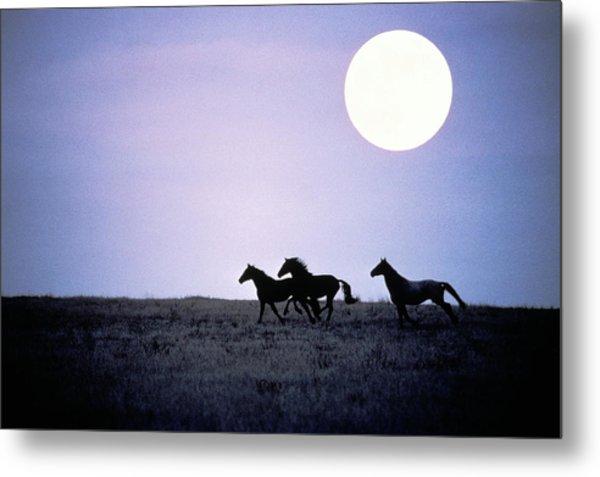 Silhouette Of Wild Horses Running In Metal Print by Jake Rajs