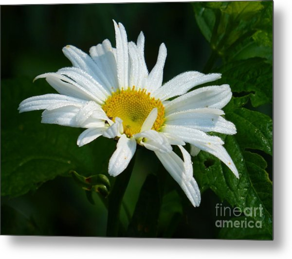 Metal Print featuring the photograph Simple Perfection by Rosanne Licciardi