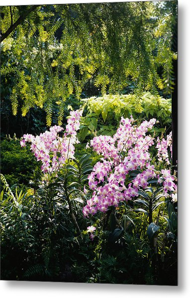 Singapore, National Orchid Garden Metal Print