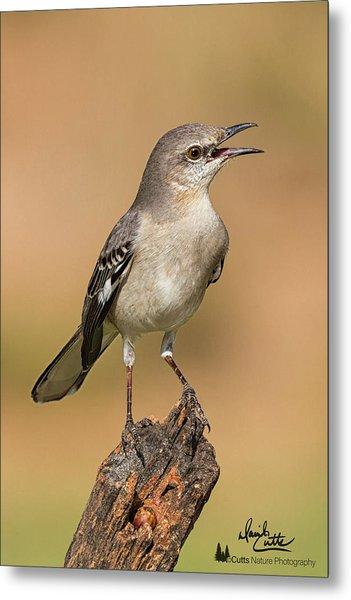 Singing Mockingbird Metal Print