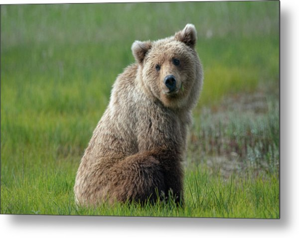Sitting Peacefully Metal Print