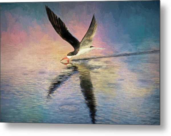 Skimmer In The Spotlight Metal Print