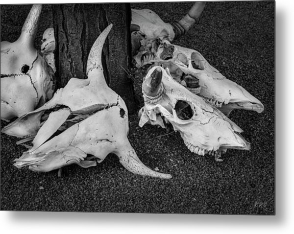 Metal Print featuring the photograph Skulls V Bw by David Gordon