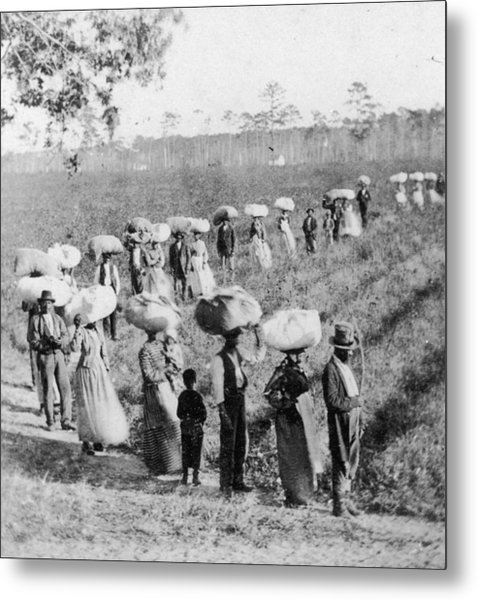 Slaves In The Cotton Fields Metal Print by Fotosearch