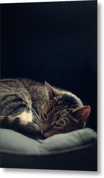 Sleepy Cat Metal Print