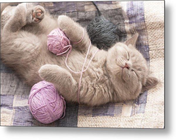 Sleeping Kitten Rare Color Lilac Metal Print