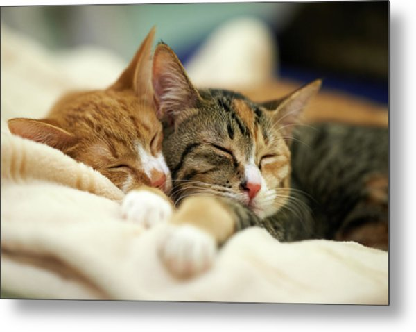 Sleeping Kittens Metal Print by Akimasa Harada
