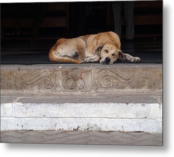 Sleeping Street Dog At Church Metal Print
