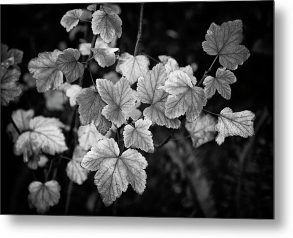 Slipping Into Fall Metal Print