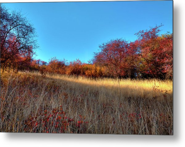 Metal Print featuring the photograph Sliver Of Sunlight by David Patterson