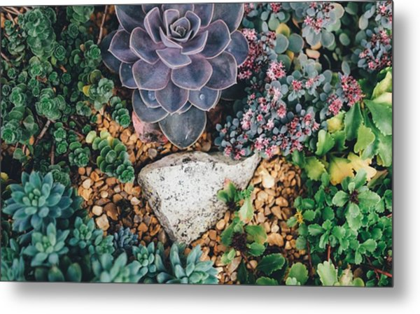 Small Succulent Garden Metal Print