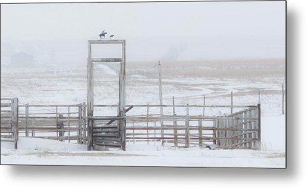 Metal Print featuring the photograph Snow And Corral 01 by Rob Graham