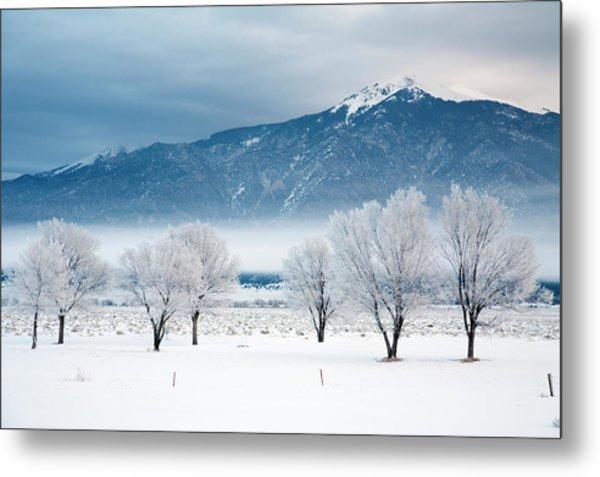 Snow Covered Trees, Sangre De Cristo Metal Print