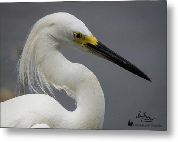 Snow Egret Portrait Metal Print