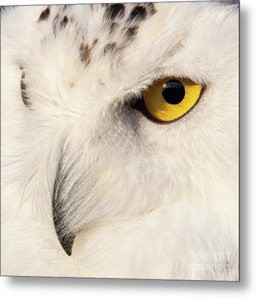 Snow Owl Eye Metal Print